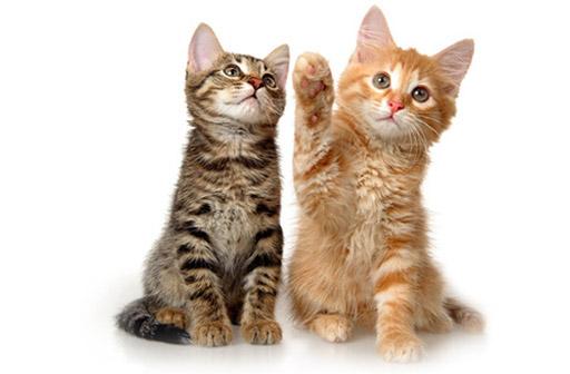 pet_cat